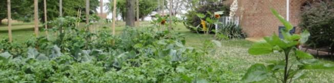 Robert's garden 2013