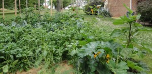 Robert's Garden 2012