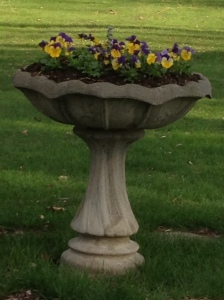 The pansies are my offering to brighten up the yard.